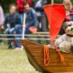 SATTEL_FEST15dogdance_benny_foto-J.Winter